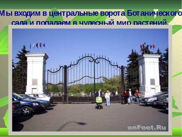 Мы входим в центральные ворота Ботанического сада и попадаем в чудесный мир р...