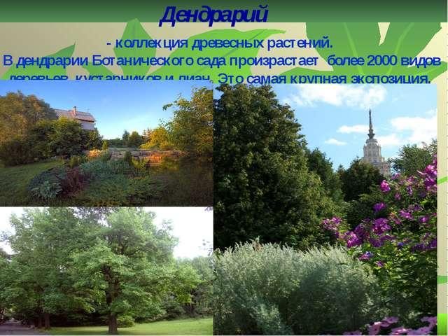 Дендрарий - коллекция древесных растений. В дендрарии Ботанического сада прои...