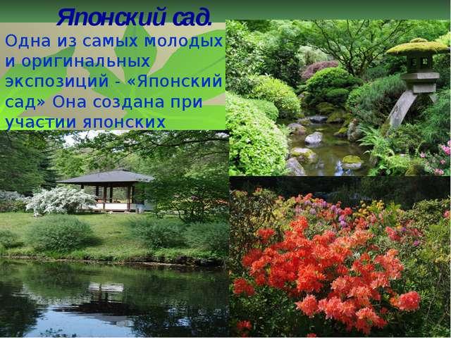 Японский сад. Одна из самых молодых и оригинальных экспозиций - «Японский сад...