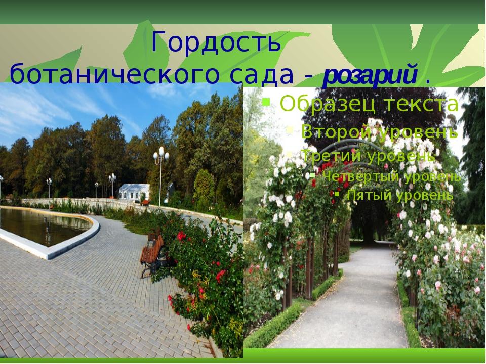 Гордость ботаническогосада-розарий .