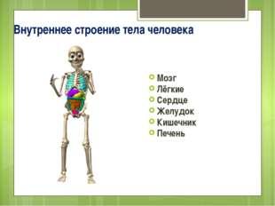 Внутреннее строение тела человека Мозг Лёгкие Сердце Желудок Кишечник Печень