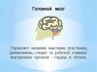 Головной мозг Управляет нашими мыслями, чувствами, движениями, следит за рабо