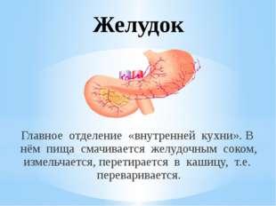 Желудок Главное отделение «внутренней кухни». В нём пища смачивается желудочн