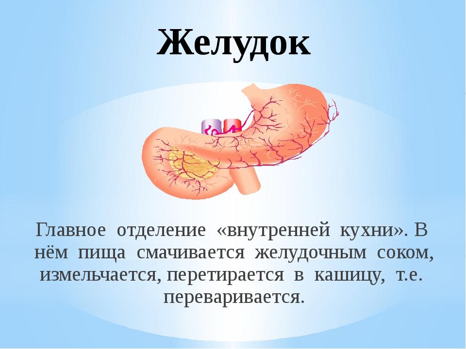 Желудок Главное отделение «внутренней кухни». В нём пища смачивается желудочн...