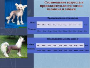 Соотношение возраста и продолжительности жизни человека и собаки Продолжит