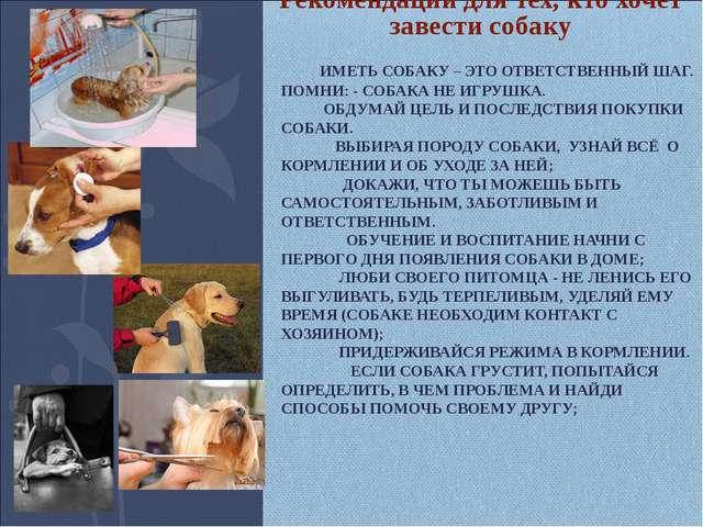 Рекомендации для тех, кто хочет завести собаку ИМЕТЬ СОБАКУ – ЭТО ОТВЕТСТВЕН...