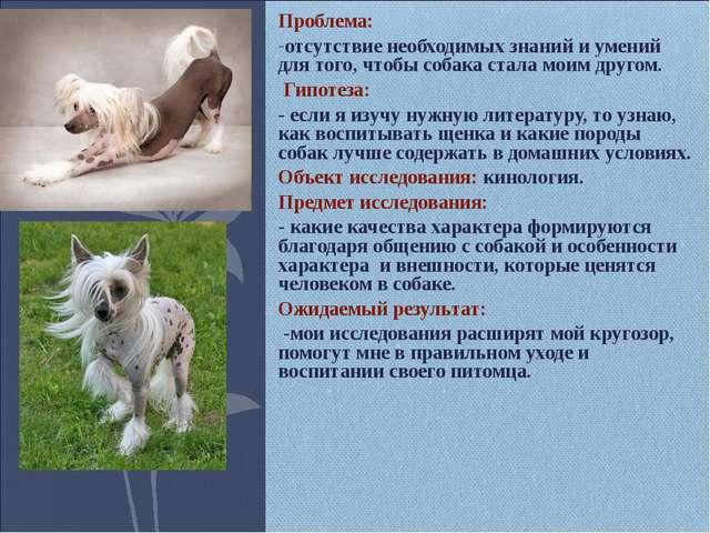 Проблема: отсутствие необходимых знаний и умений для того, чтобы собака стала...