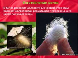 Изготовление шелка В Китае разводят шелковичных червей (гусеницы бабочки шел