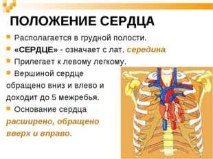 ПОЛОЖЕНИЕ СЕРДЦА Располагается в грудной полости. «СЕРДЦЕ» - означает с лат.