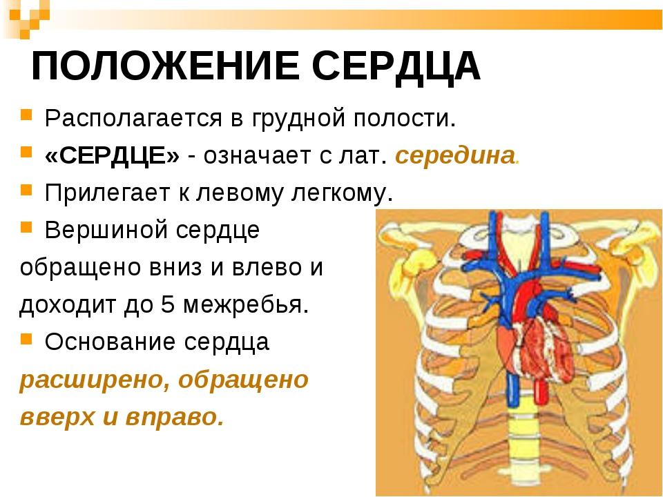 ПОЛОЖЕНИЕ СЕРДЦА Располагается в грудной полости. «СЕРДЦЕ» - означает с лат....