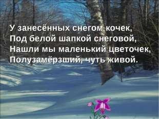 У занесённых снегом кочек, Под белой шапкой снеговой, Нашли мы маленький цвет