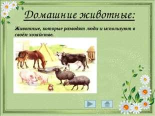 Домашние животные: Животные, которые разводят люди и используют в своём хозя
