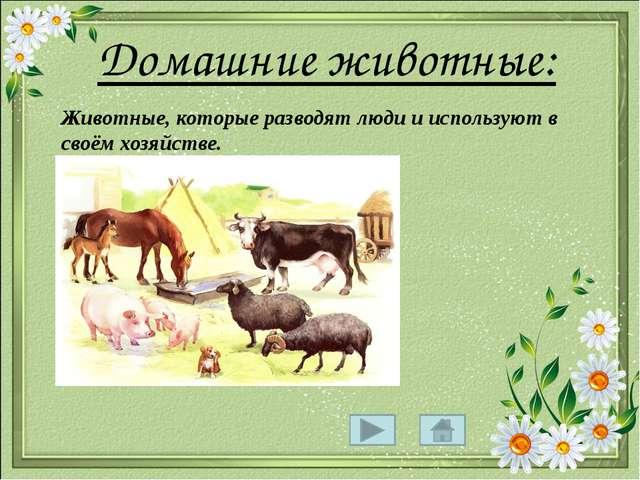 Конспект урока в 1 классе рисование тема домашние животные