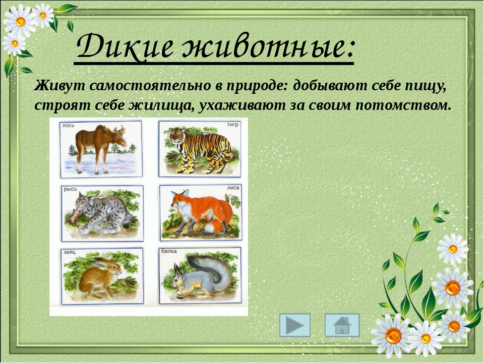 Дикие животные: Живут самостоятельно в природе: добывают себе пищу, строят с...