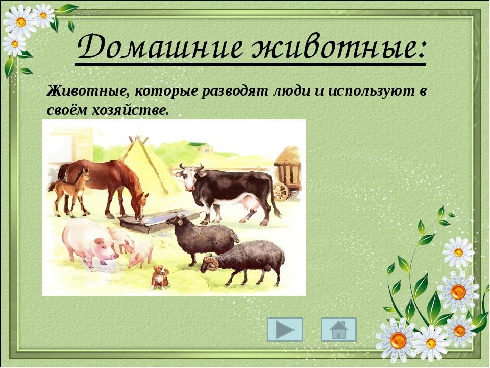 Домашние животные: Животные, которые разводят люди и используют в своём хозя...
