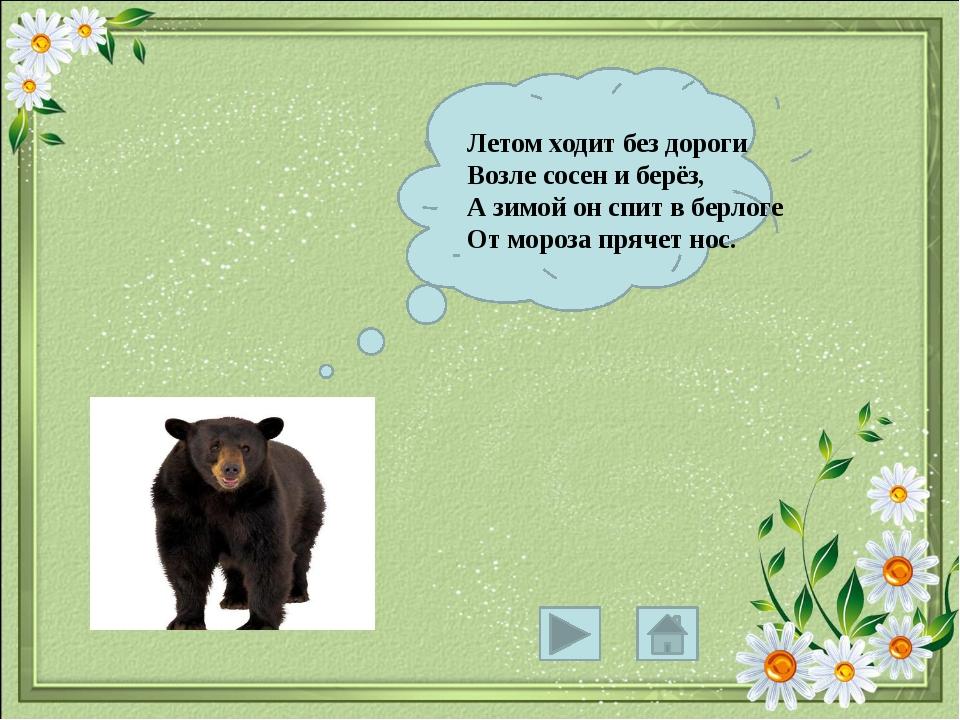 Летом ходит без дороги Возле сосен и берёз, А зимой он спит в берлоге От мор...