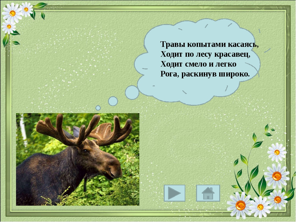 Травы копытами касаясь, Ходит по лесу красавец, Ходит смело и легко Рога, ра...