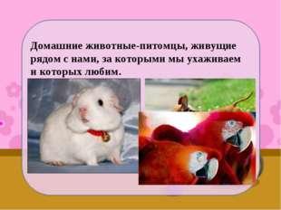 Домашние животные-питомцы, живущие рядом с нами, за которыми мы ухаживаем и к