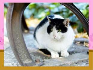 У нас в семье живут два кота: Степан и Барсик. Им 1 год и 3 года. У Степана з
