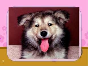 Почему собака злая Ходит хвостиком виляя? То ли хвостик так обучен, То ли пло