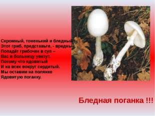 Скромный, тоненький и бледный Этот гриб, представьте, - вредный. Попадёт гриб
