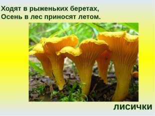 лисички Ходят в рыженьких беретах, Осень в лес приносят летом.