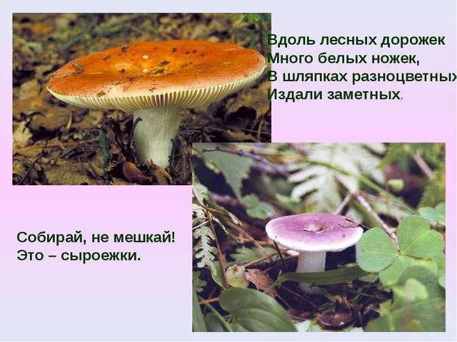 Вдоль лесных дорожек Много белых ножек, В шляпках разноцветных, Издали заметн...