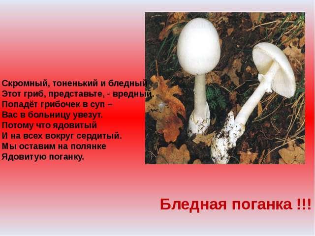 Скромный, тоненький и бледный Этот гриб, представьте, - вредный. Попадёт гриб...