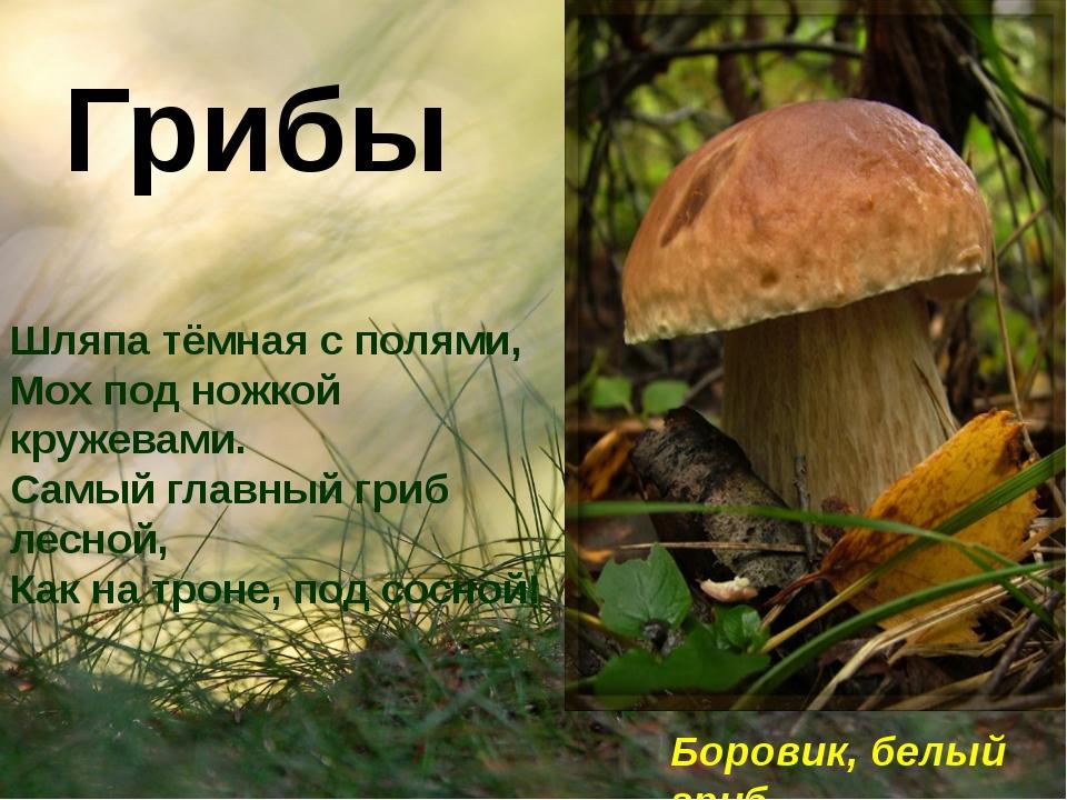 Грибы Шляпа тёмная с полями, Мох под ножкой кружевами. Самый главный гриб ле...