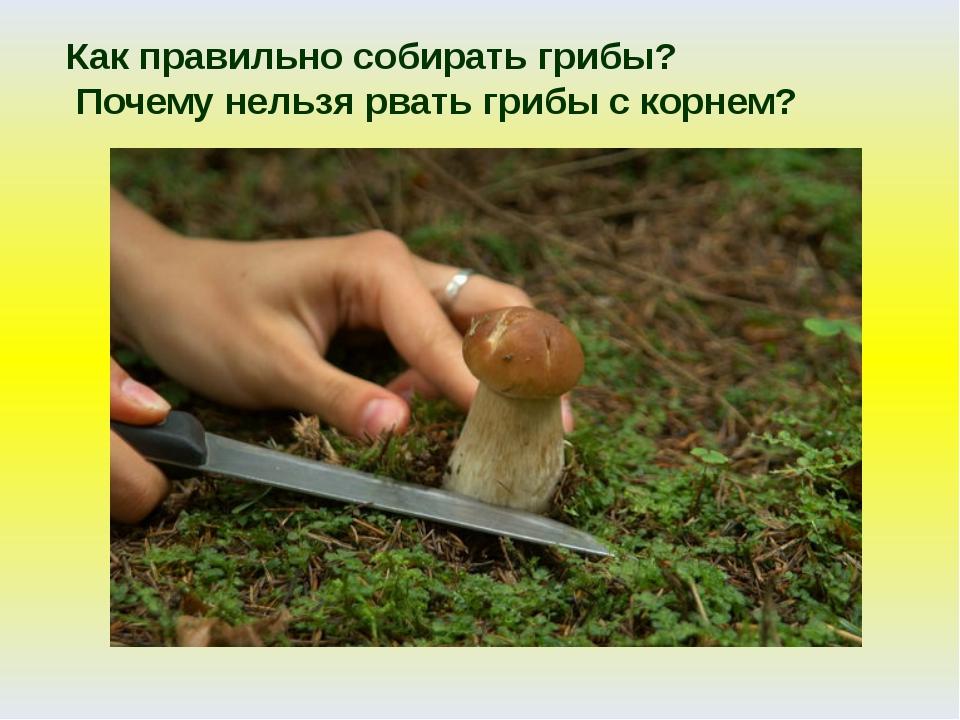 Как правильно собирать грибы? Почему нельзя рвать грибы с корнем?