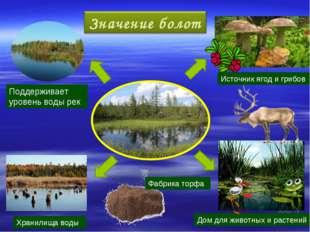 Источник ягод и грибов Фабрика торфа Дом для животных и растений Хранилища во