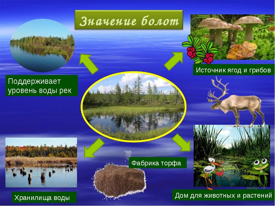 Источник ягод и грибов Фабрика торфа Дом для животных и растений Хранилища во...