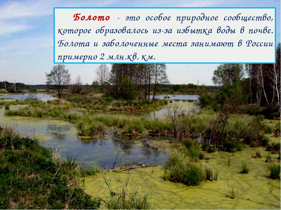 Болото - это особое природное сообщество, которое образовалось из-за избытка...