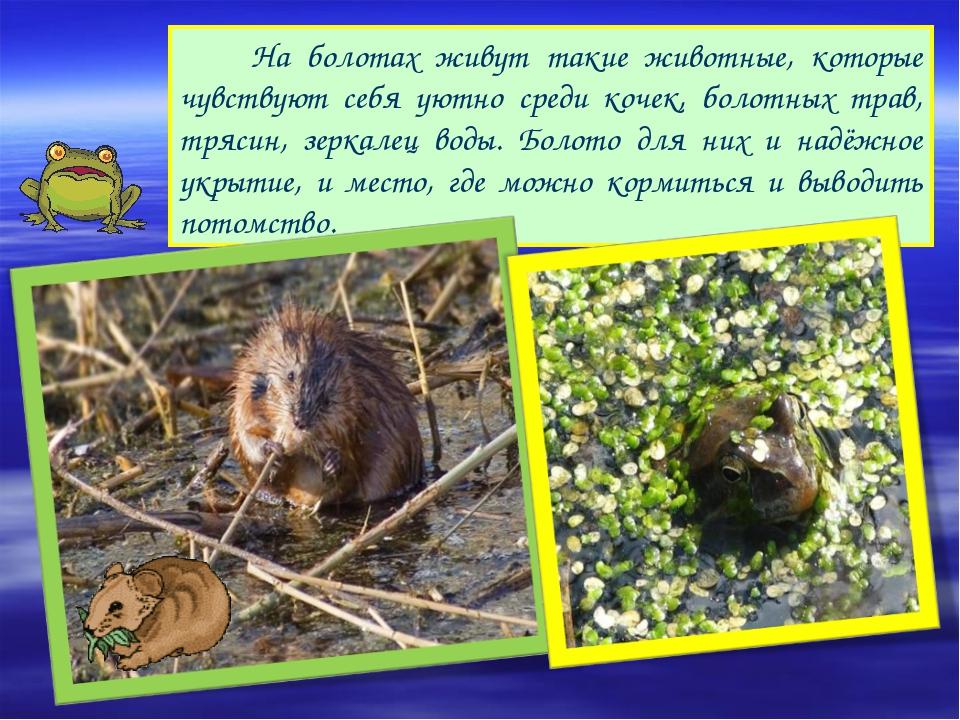 На болотах живут такие животные, которые чувствуют себя уютно среди кочек, б...