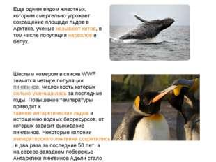 Еще одним видом животных, которым смертельно угрожает сокращение площади льдо