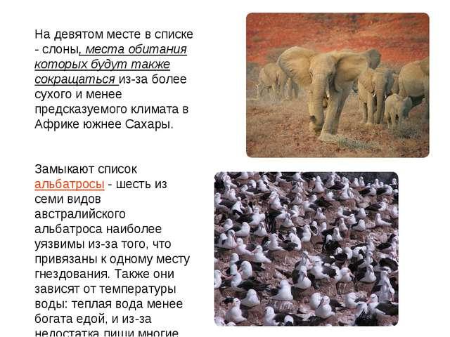 На девятом месте в списке - слоны, места обитания которых будут также сокраща...