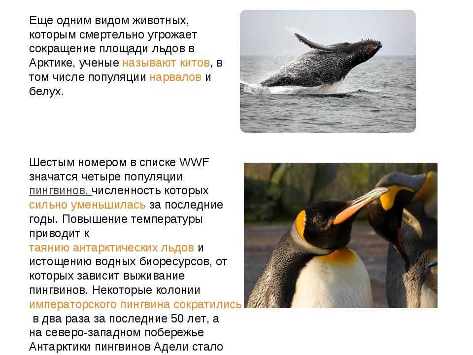 Еще одним видом животных, которым смертельно угрожает сокращение площади льдо...