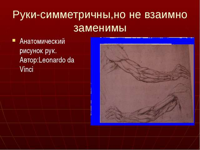 Руки-симметричны,но не взаимно заменимы Анатомический рисунок рук. Автор:Leon...