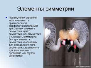 Элементы симметрии При изучении строения тела животного в сравнительной морфо