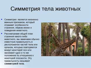 Симметрия тела животных Симметрия является жизненно важным признаком, который