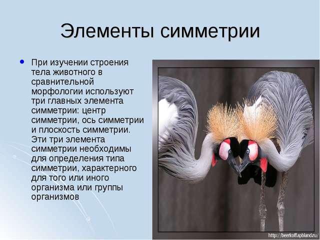 Элементы симметрии При изучении строения тела животного в сравнительной морфо...