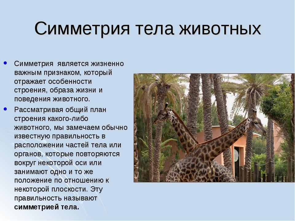 Симметрия тела животных Симметрия является жизненно важным признаком, который...