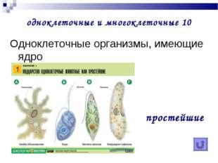 одноклеточные и многоклеточные 10 Одноклеточные организмы, имеющие ядро прос