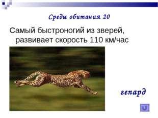 Среды обитания 20 Самый быстроногий из зверей, развивает скорость 110 км/час