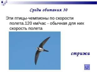 Среды обитания 30 Эти птицы-чемпионы по скорости полета.120 км/час - обычная
