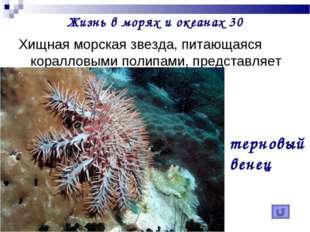 Жизнь в морях и океанах 30 Хищная морская звезда, питающаяся коралловыми поли