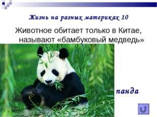 Жизнь на разных материках 10 Животное обитает только в Китае, называют «бамбу