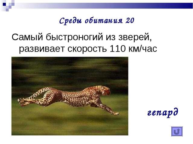Среды обитания 20 Самый быстроногий из зверей, развивает скорость 110 км/час...