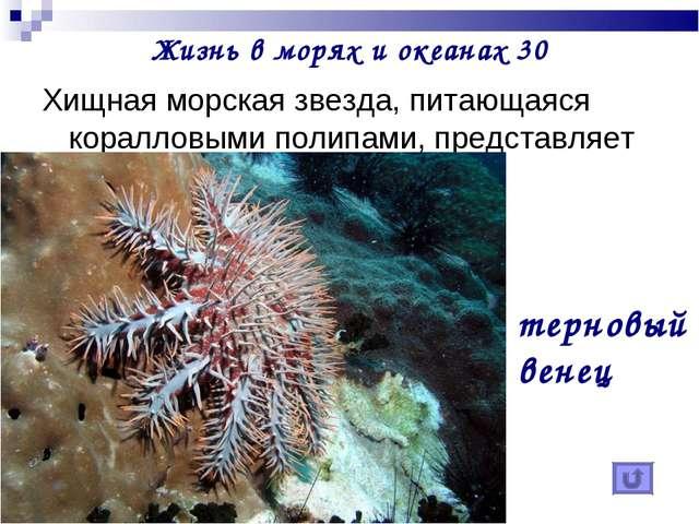 Жизнь в морях и океанах 30 Хищная морская звезда, питающаяся коралловыми поли...