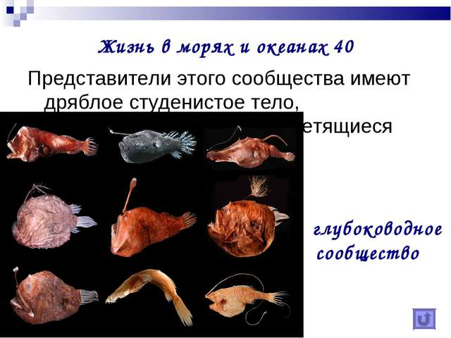 Жизнь в морях и океанах 40 Представители этого сообщества имеют дряблое студе...